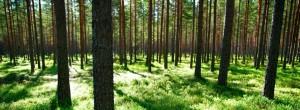 Kelionė į mišką
